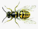 kill yellow jackets